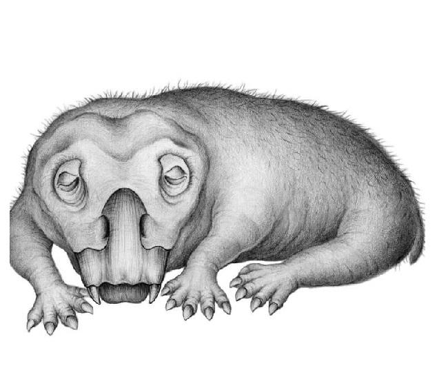 Fossils reveal 'Hibernation-like' state helped 250-million-year old mammal Lystrosaurus survive polar winters