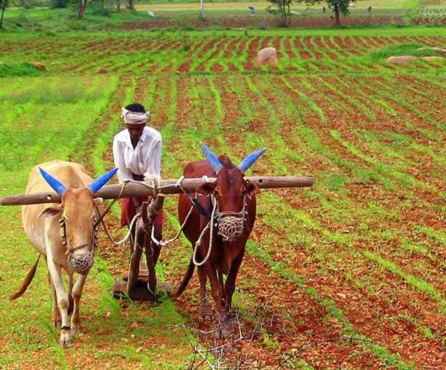 Kisan Diwas 2020: Why National Farmers' Day is observed in India on December 23?
