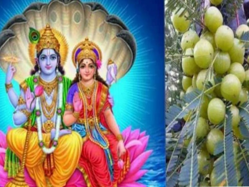 Amla Navami 2020: Why Lord Vishnu is worshipped on 'Akshay Navami'? All you need to know about rituals and puja tithi of this day
