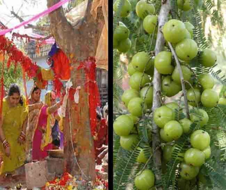 Amla Navami 2020 Date and Time: Here's when 'Akshay Navami' will be observed this year