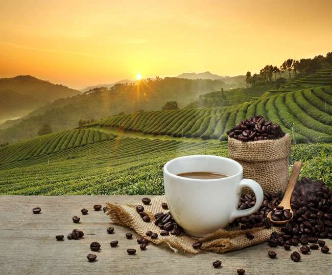 International Coffee Day 2020: 5 most expensive coffees in the world; check shocking prices here