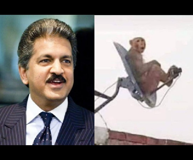 'Ek bandar, TV ke andar': Anand Mahindra announces winning captions for monkey perched on DTH