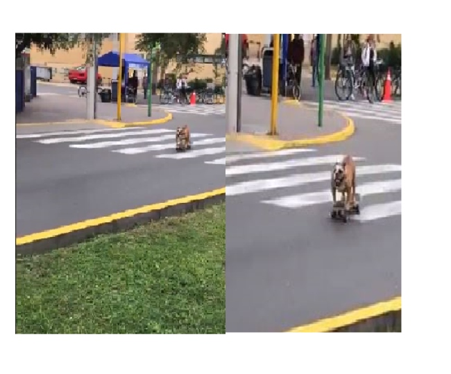 Dog on a skateboard is the 'pawwrfect' video you will come across today | Watch
