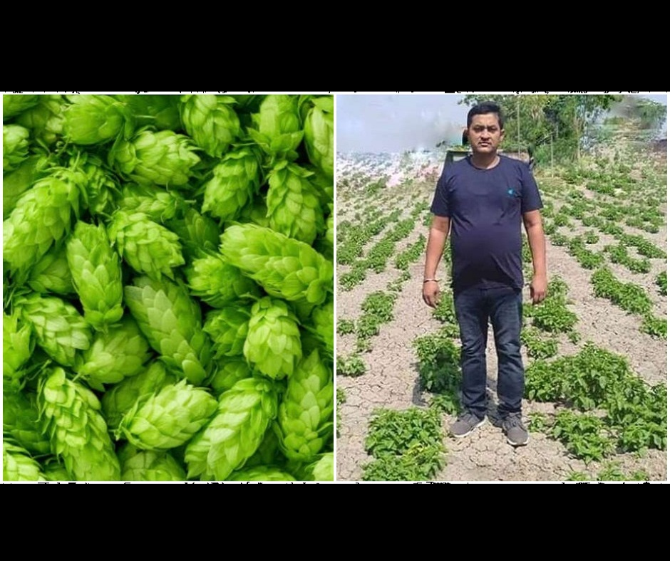 Did Bihar farmer really grow world's costliest vegetable worth Rs 1 lakh? Check here