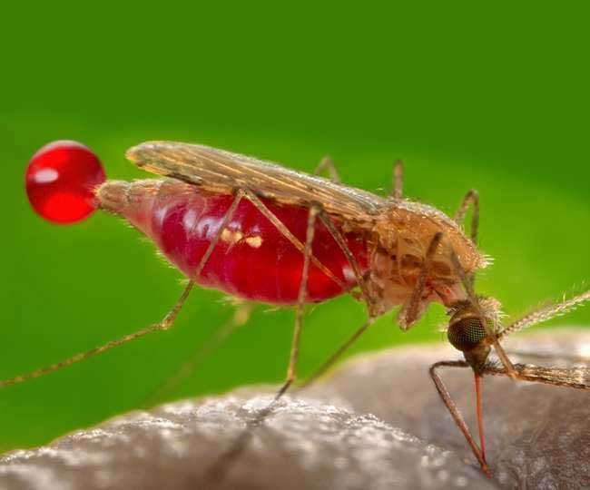 World Malaria Day 2021: Check out history, significance and theme of this day
