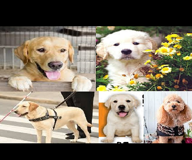National Pet Day 2021: Wishes, messages, quotes, SMS, WhatsApp and Facebook status to share on this day