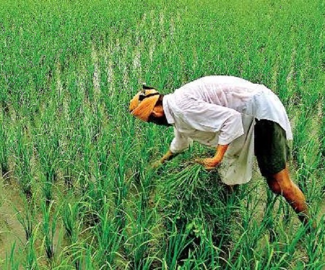 Union Budget 2021: Rs 75,100 cr allocated for farmers; agriculture credit target increased to Rs 16.5 lakh cr