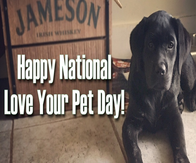 National Love Your Pet Day 2021: Wishes, quotes, SMS, WhatsApp, Facebook and Instagram status to share with pet lovers
