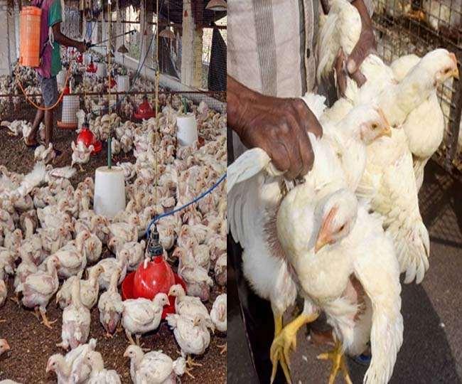 Bird Flu: Samples from Delhi's Ghazipur chicken mandi, shut for 10 days, test negative for avian influenza