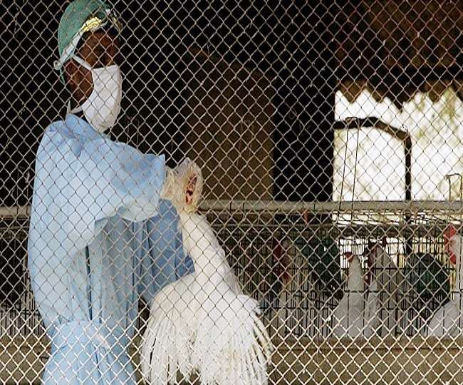 Bird Flu Outbreak: How does H5N1 spread to humans? Know symptoms, causes, prevention of Avian influenza