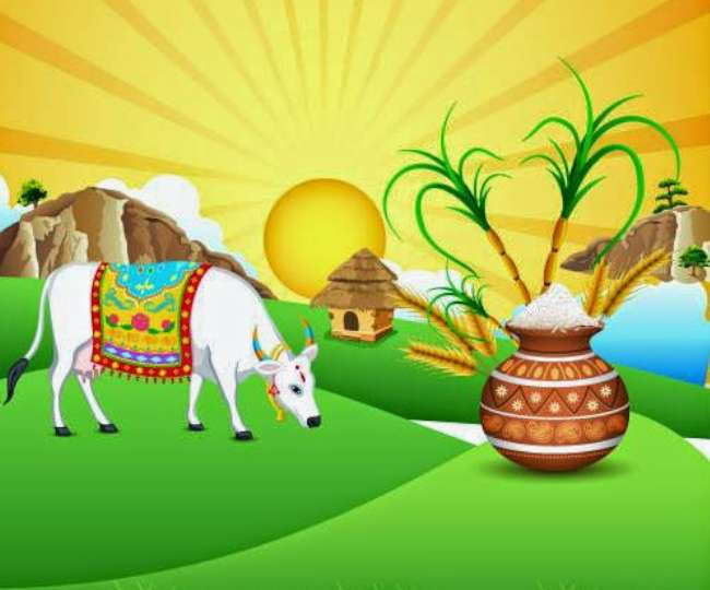 Pongal 2021: All you need to know about the history, significance, importance, and celebrations of this popular harvest festival