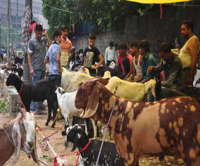 Bakra Eid 2021: Goat prices touch whopping Rs 2.5 lakh-mark amid low supply due to COVID-19