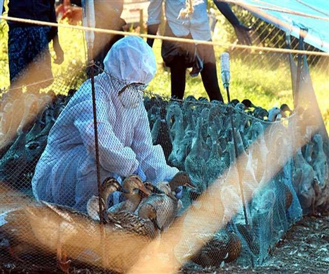 India reports 1st bird flu death as 11-year-old boy succumbs to avian influenza in Delhi