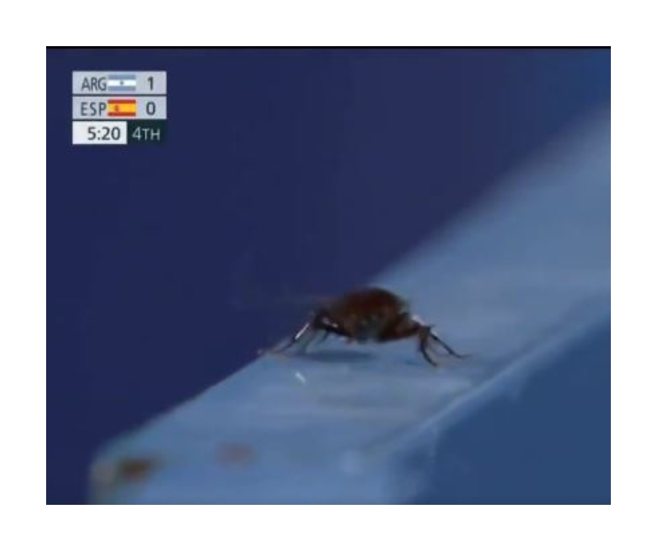 Tokyo Olympics: Cameraman focuses on cockroach amidst Spain vs Argentina Hockey match; sparks Twitter funny reactions