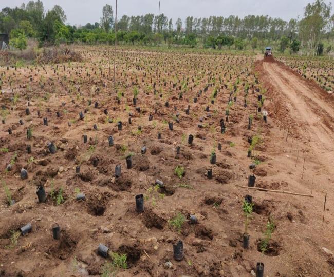 Green India challenge: Telangana plants 1 million saplings; breaks world record