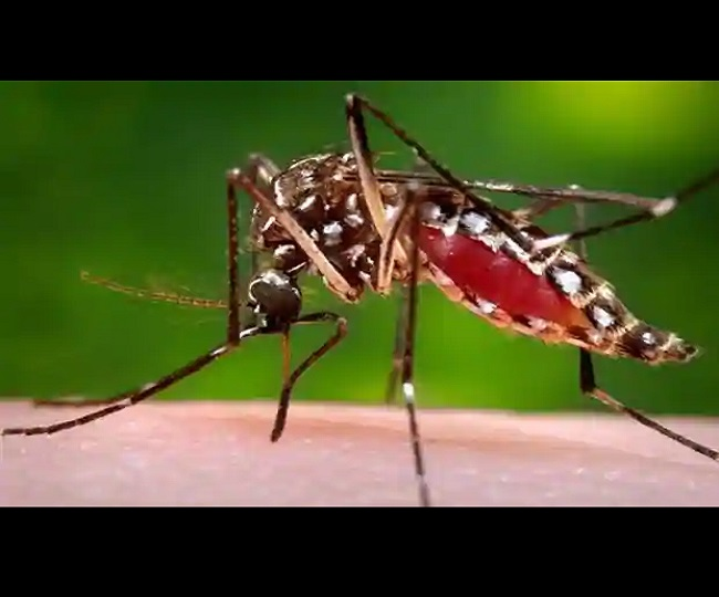 Consistent surveillance, proper disposal of solid water among Karnataka's guidelines to contain Zika virus spread