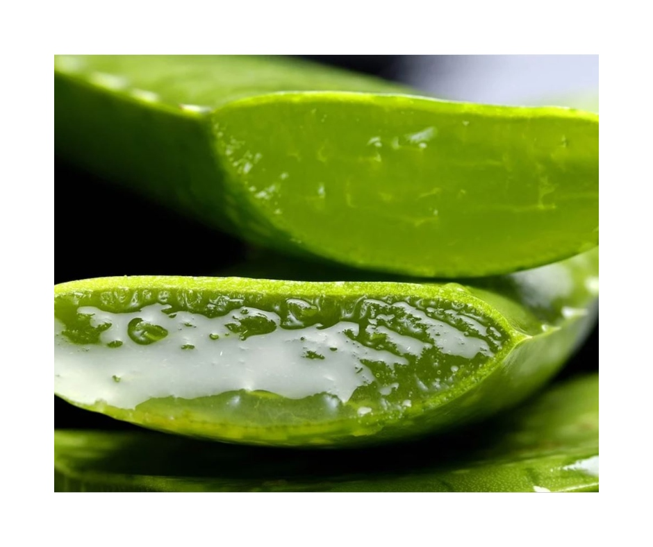 Summer Tips: 4 ways neem and aloe vera can help in your skin care