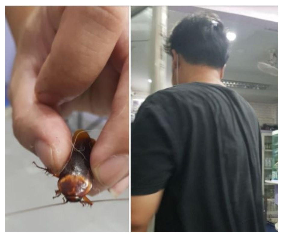 Man takes injured cockroach to veterinary doctor for treatment after someone steps on it | See pics