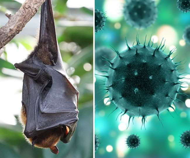 New batch of coronaviruses discovered in bats in China. Can it be a cause of worry?