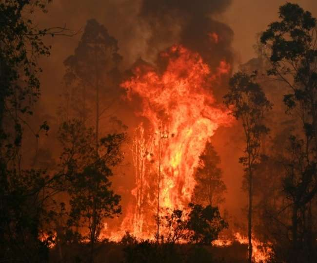 International Day of Forests 2021: From Nagaland to Himachal, 4 forest fires  that shocked India
