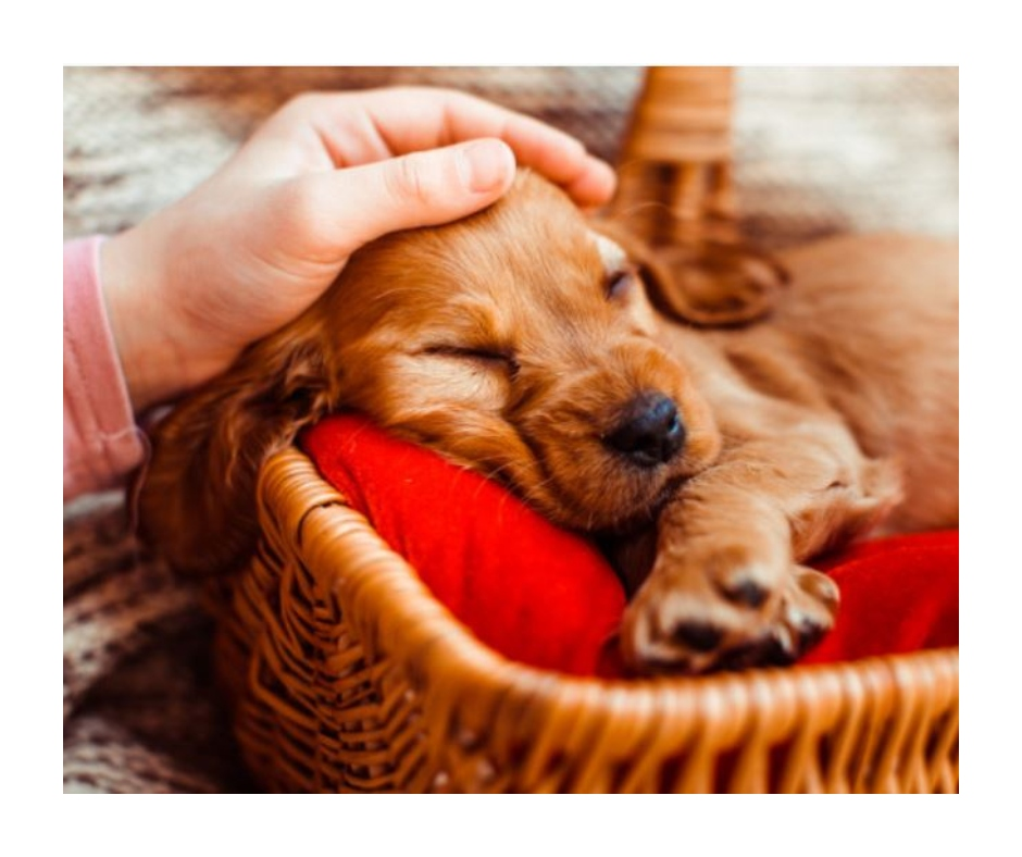 National Puppy Day 2021: Wishes, quotes, WhatsApp messages, Facebook and Instagram statuses to share with your friends