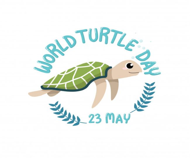 World Turtle Day 2021: 8 interesting facts about Turtles that will leave you stunned   Read Here