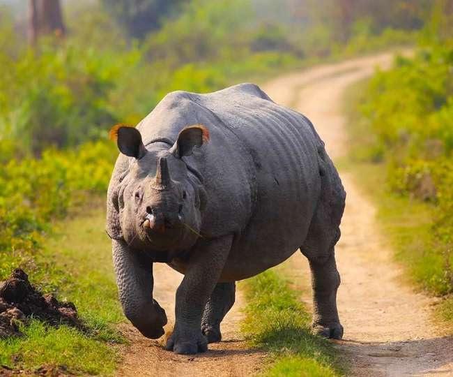 Jagran Explainer: Why Assam govt has decided to burn nearly 2,500 Rhino horns on World Rhino Day