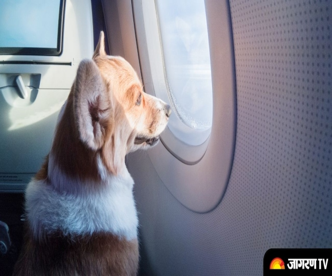 Man books entire Air India Business class cabin for his pet dog to travel in luxury