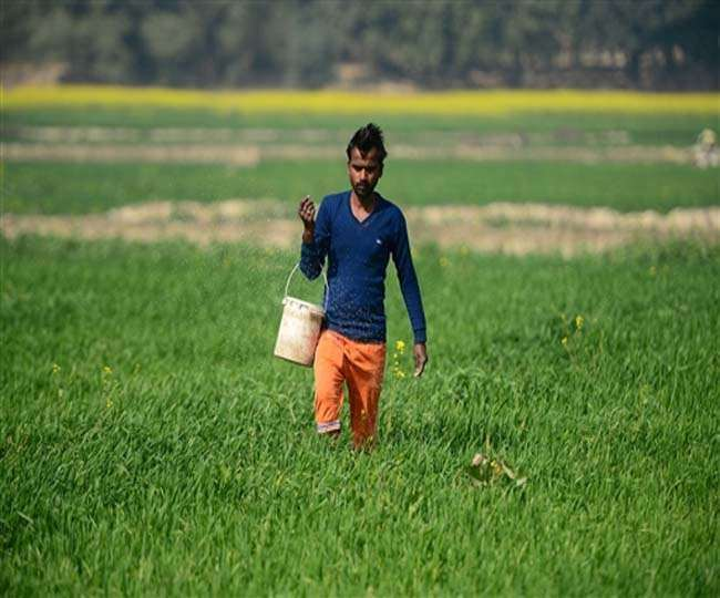 Jagran Explainer: What are 35 new crop varieties launched by PM Modi and why are they crucial for India