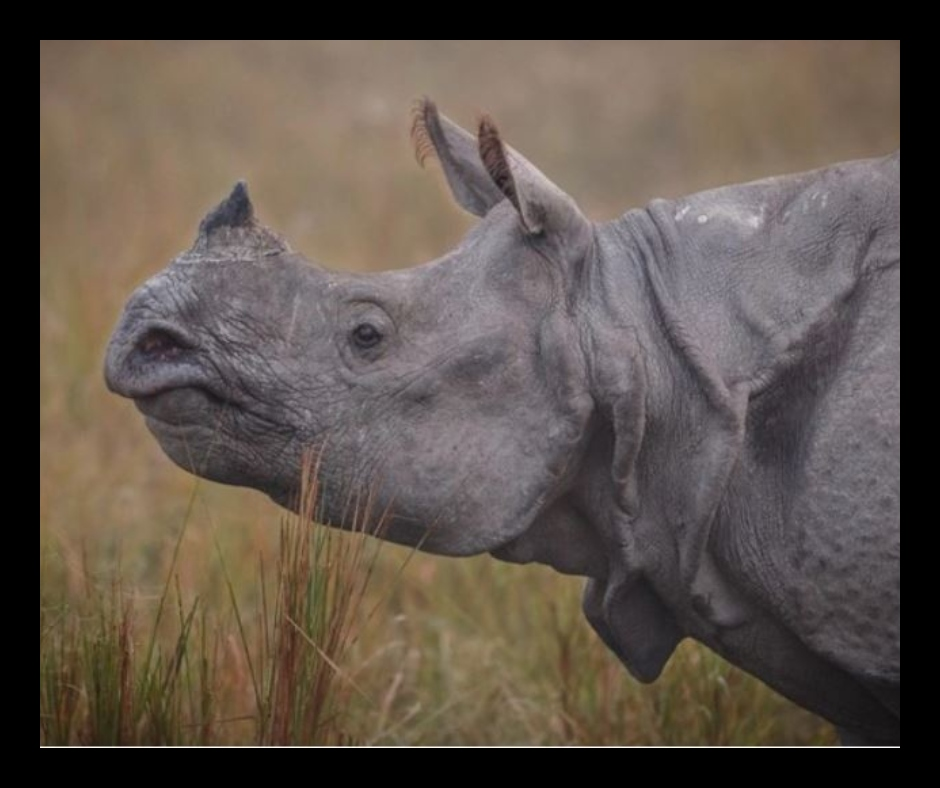 World Rhino Day 2021: Here's the history, significance, quotes and more for the special day