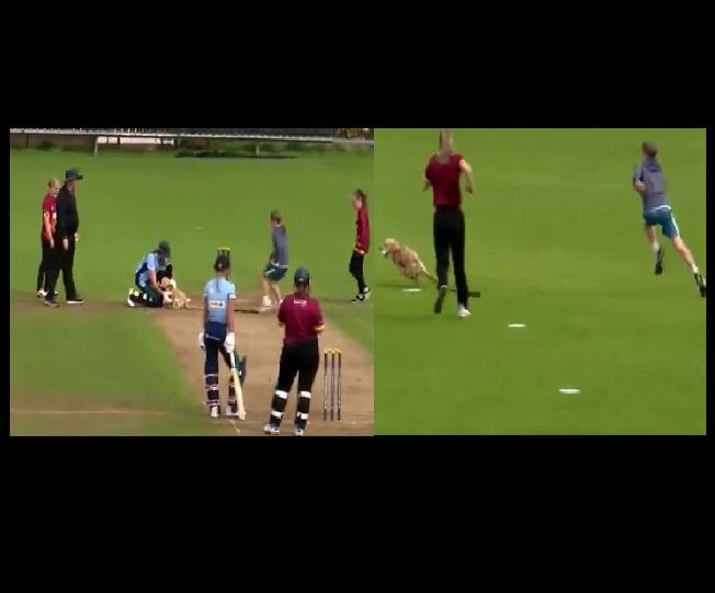 Watch   Dog interrupts cricket match, shows fielding skills by stealing ball